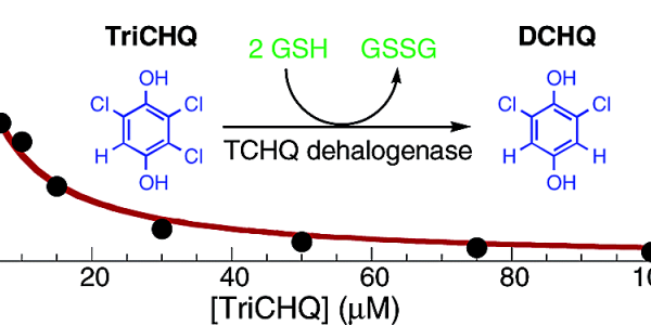 Tetrachlorohydroquinone dehalogenase catalyzes the reaction shown at right during the degradation of pentachlorophenol by Sphingobium chlorophenolicum, It also catalyzes the double bond isomerization shown at left at the same active site, suggesting that it arose from an enzyme such as maleylacetoacetate isomerase or maleylpyruvate isomerase, which are involved in degradation of tyrosine and benzoate, respectively.