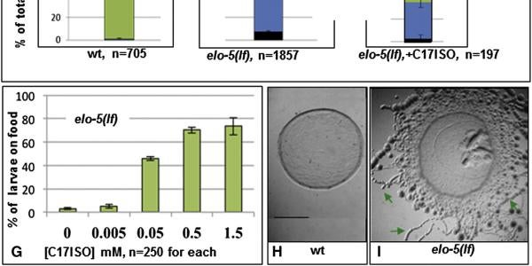 Food-Seeking Ability Is Compromised in mmBCFA-Deficient L1 Larvae