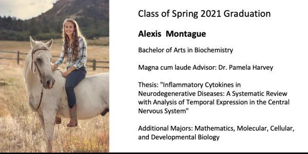 Alexis  Montague
