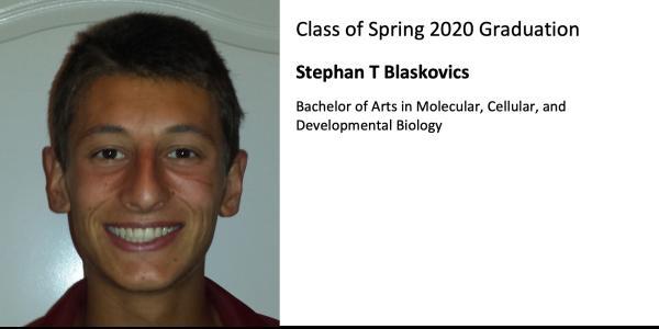 Stephan T Blaskovics
