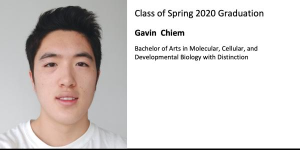 Gavin  Chiem