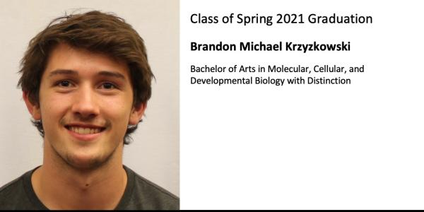 Brandon Michael Krzyzkowski