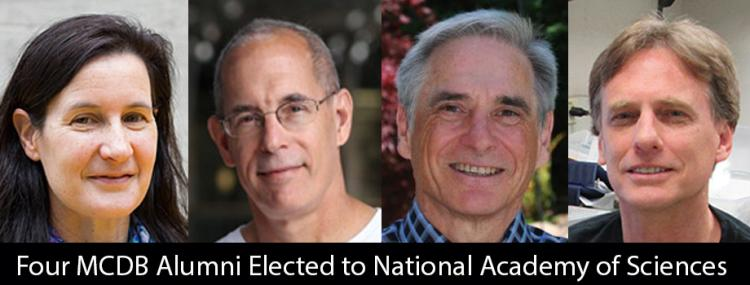 Four MCDB Alumni Elected to National Academy of Sciences
