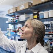 Corrie Detweiler has teamed up with a Boulder company to work on compounds that make old antibiotics new again. (Credit: Patrick Campbell/CU Boulder)