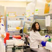 Hands-On Human Induced Pluripotent Stem Cell Culture Trainees