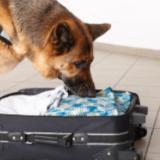 dog-sniffing