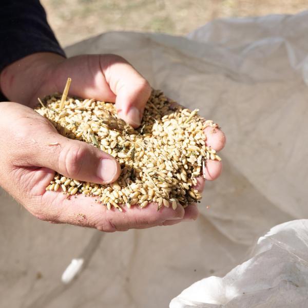 Grains in hands