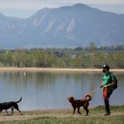 Man walking dogs at park
