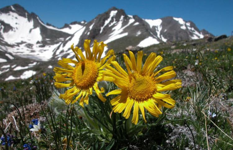 Flowers in the tundra