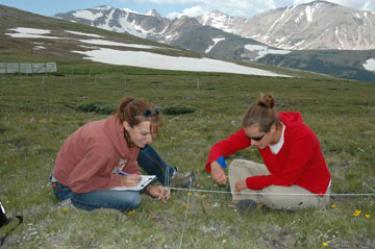 Students measure vegetation