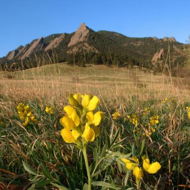 Photo of flower and Flatirons