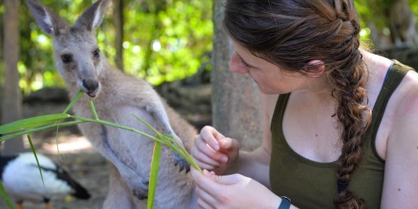 Student feeding kangaroo in Australia