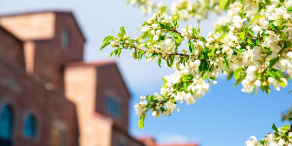 A scenic photo of spring flowers on the CU Boulder campus