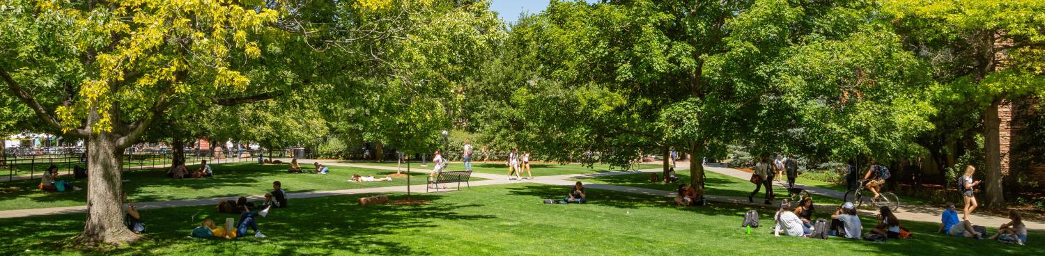 the grassy quad busy with people walking around and studying