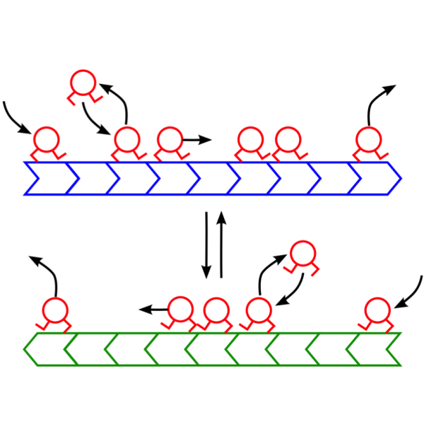 Cartoon of motor dynamics along anti-parallel MTs