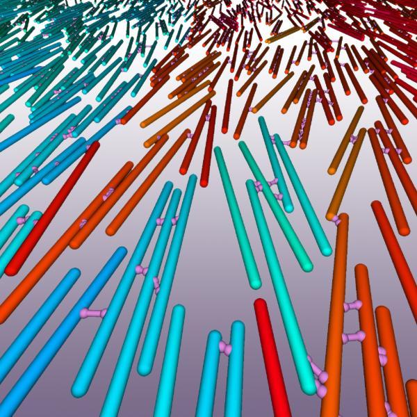 Bulk simulation of crosslinked motile spherocylinders