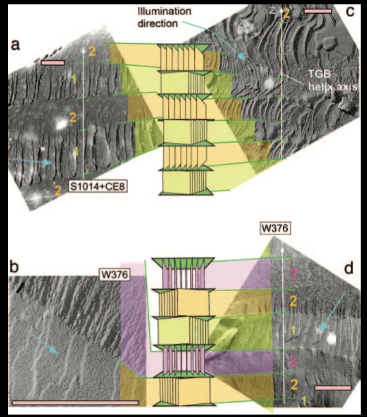 Main image from Fernsler et al. 2005 PNAS