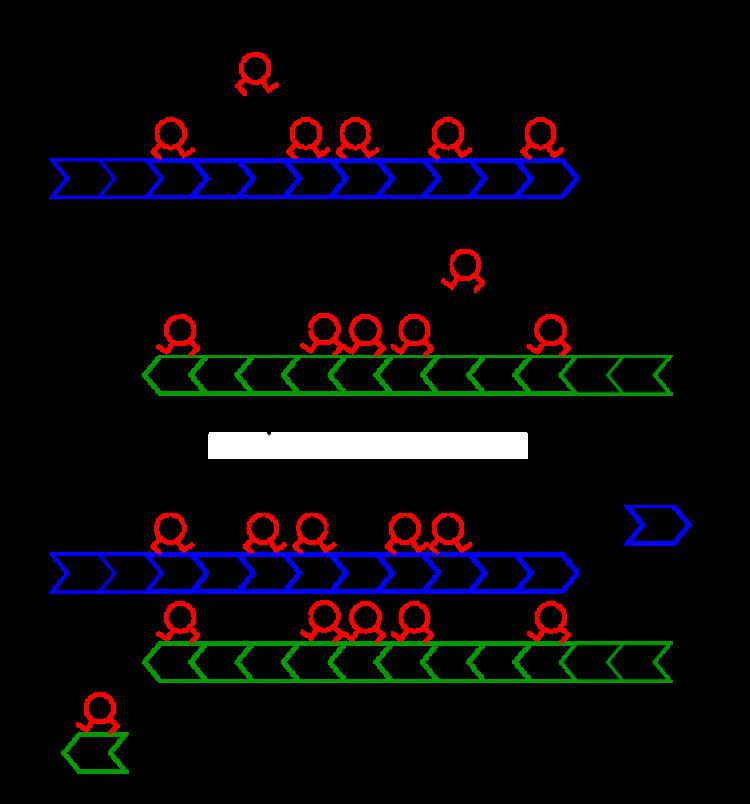 Main image from Kuan 2019 BioRxiv posting
