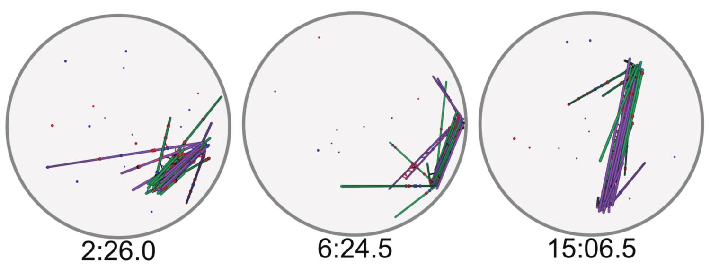 Spindle simulation snapshot