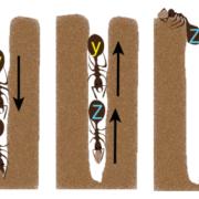 Ants image