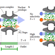 Thumbnail of the nuclear pore complex from Maguire et al. 2019