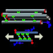 Motor mechanics on simulated microtubules