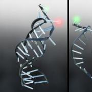 Nesbitt Lab Graphic