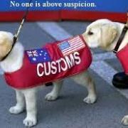 dogs customs