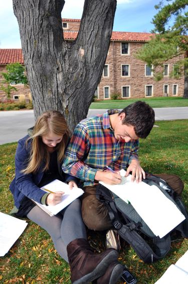 students studying under a tree