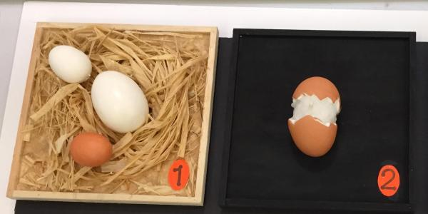 Tactile digram of eggs in a straw nest and a cracked open egg on a black background.