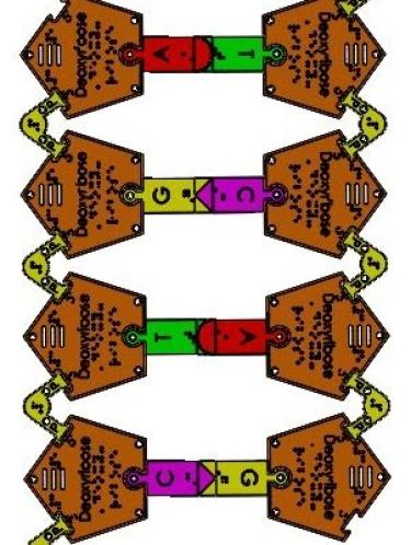 Illustration of puzzle pieces assembled to form DNA molecule