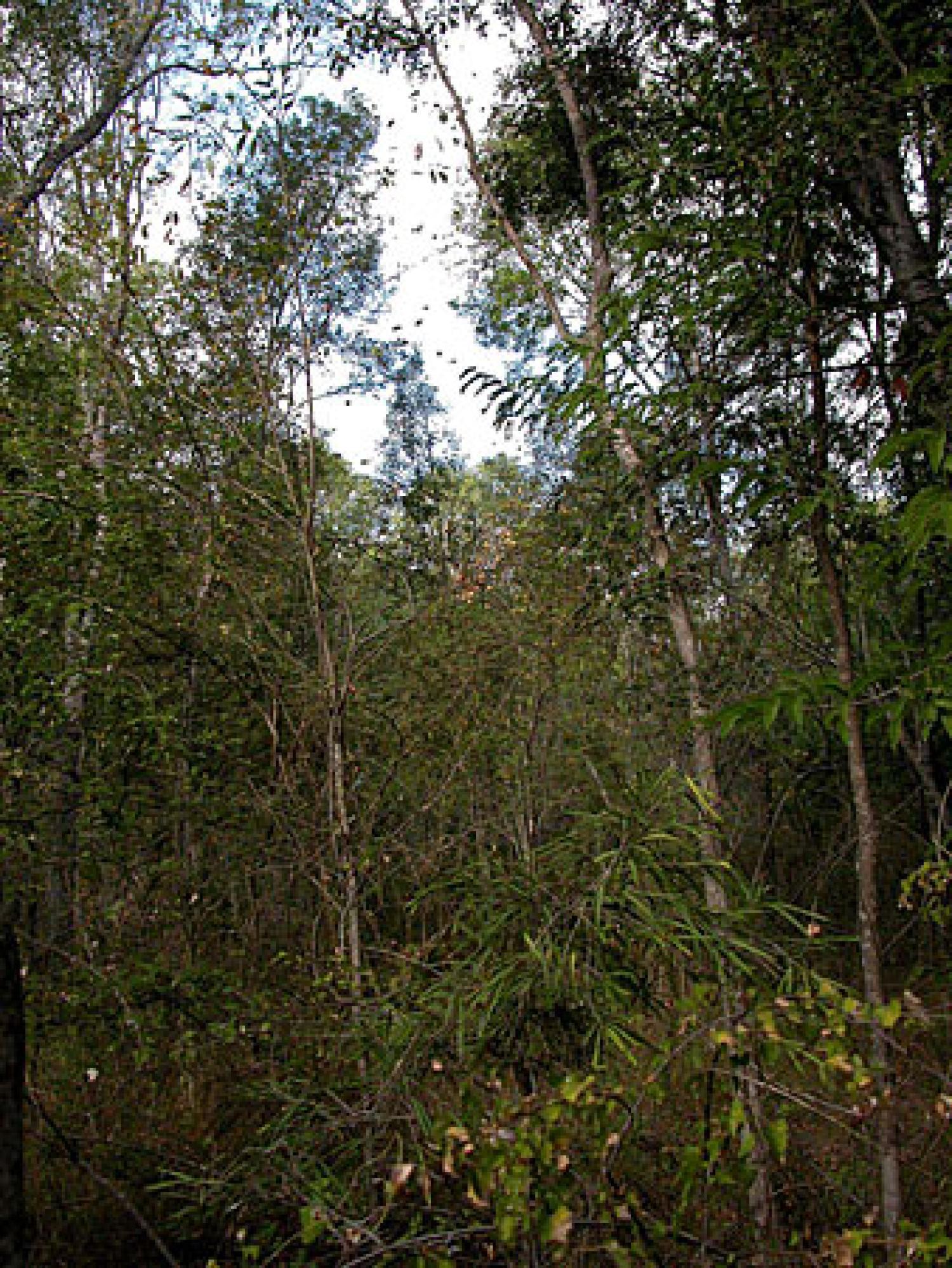 The Beza Mahafaly special reserve forest habitat