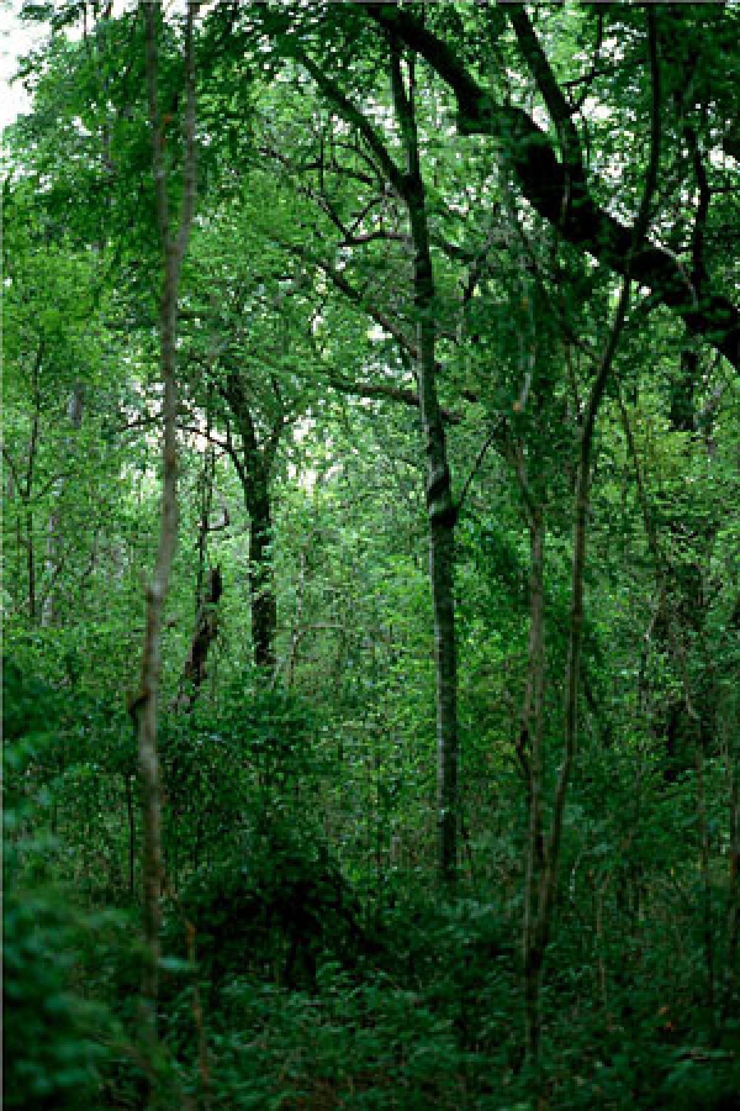 ravine forest
