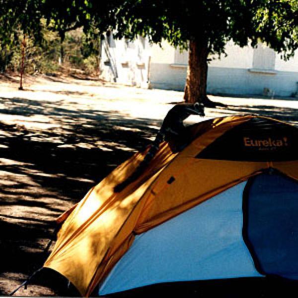 A lemur using a tent as a slide.