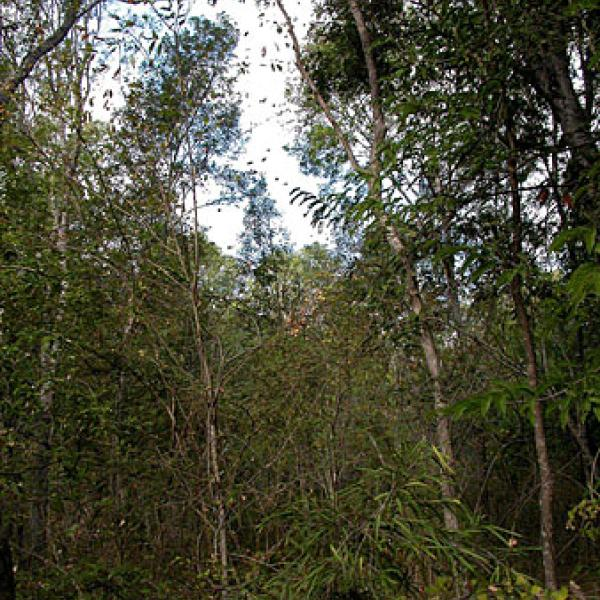 Intact forest within Beza reserve.