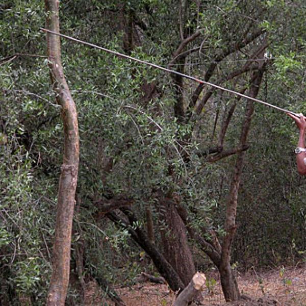 Enafa darts a lemur.