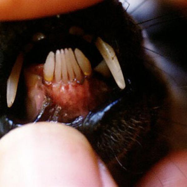 A lemur toothcomb.