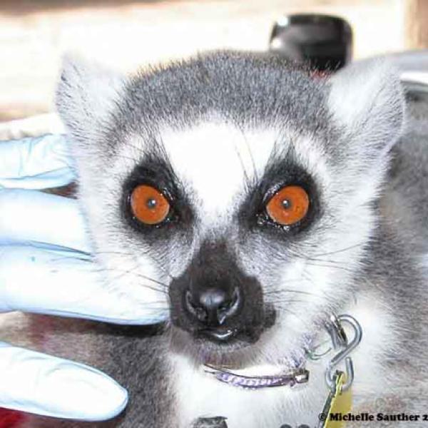 Lemurs look different!