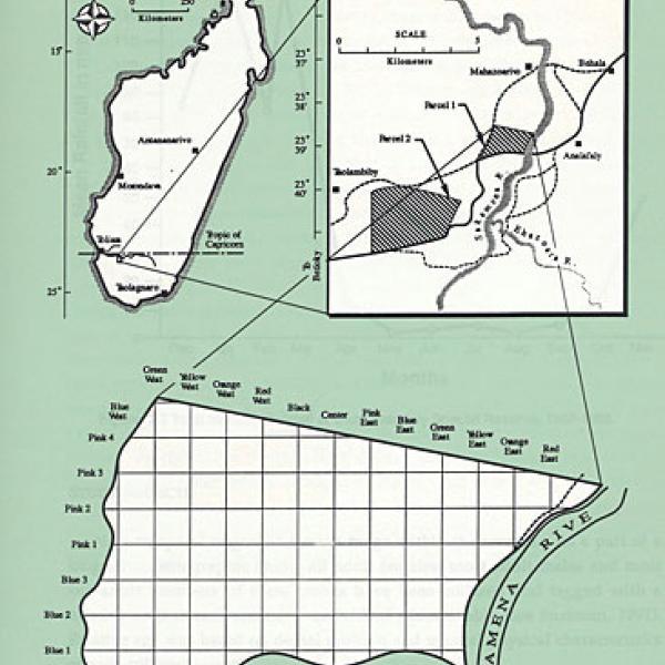 Beza Mahafaly Special Reserve in Madagascar.