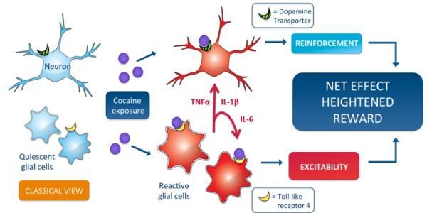 Cellular cocaine reward circuity