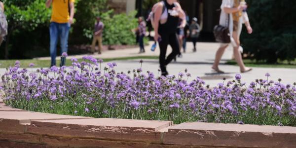 students walking around on campus