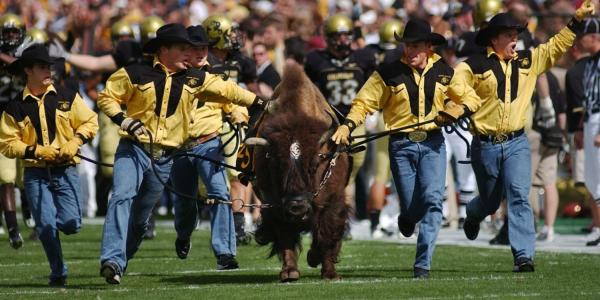 Ralphie and handlers running on the football field