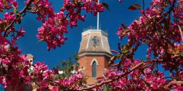 Old Main viewed through flowering branches