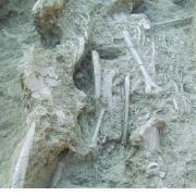 Burial holding Carved Bone Flute from Yugüe. / Entierro que contiene una flauta de hueso grabado en Yugüe.