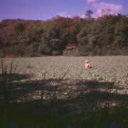 Dr. Ray Mueller in Charco Bogs. / Ray Mueller en un charco.
