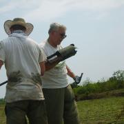 Dr. Ray Mueller augering. / Ray Mueller excava un núcleo de sediment.
