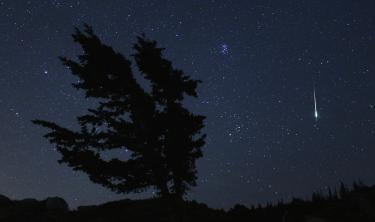 View of Night Sky with tree and meteor