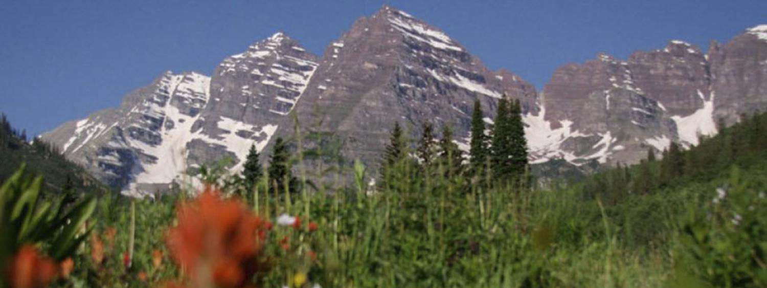 mountains with flowers in foreground