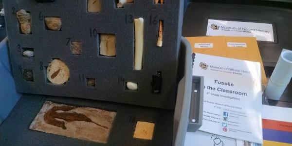 A screen shot of a fossils kit from CU's Museum of Natural History