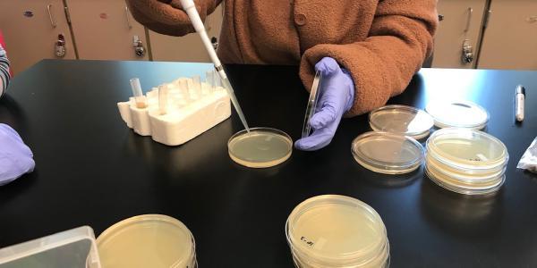 student using petri dish